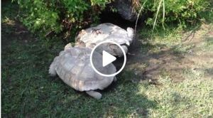 turtles onFacebook