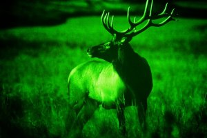 night-vision-photography